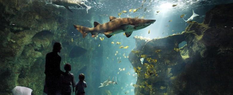Magische onderwaterbelevenis met 5 nieuwe aquaria in La Rochelle Aquarium