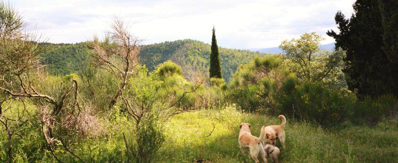 Frankrijk meest populaire bestemming voor vakantie met hond