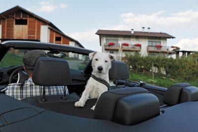 Ik ga op vakantie en neem mee… mijn hond!