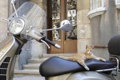 De stad van de katten – Istanbul